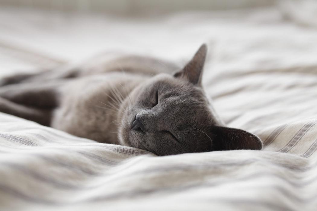 Schlafende Katze (Foto: Unsplash)
